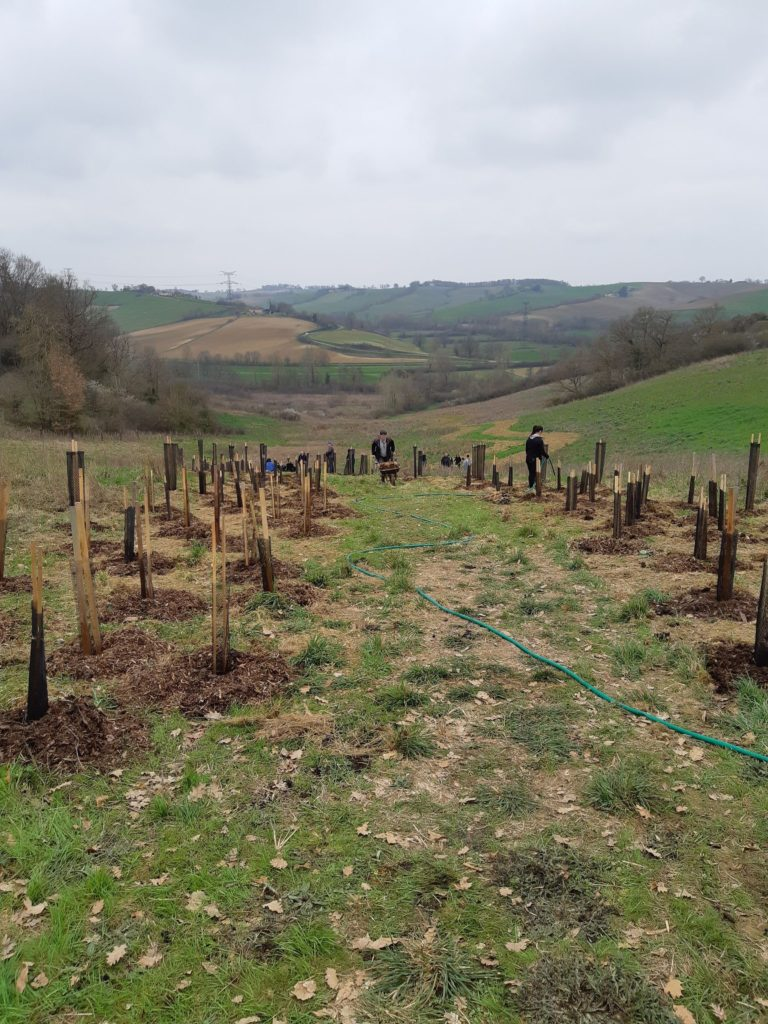 plantation d'arbres avec RTTA et les fous du bois